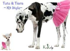 Dynamic Duel ~ Tutu & Tiara  #poochpic #tiara #tutu #fashionista #greatdane #chihuahua