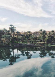 Palms reflection on the Nile - Egypt