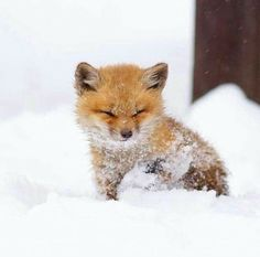 Cute baby animals, who will take you to the & # Aww & # to do - make . Süße Tierbabys, die dich zum & machen werden – … Cute baby animals, who will take you to the & # Aww & # will do – Baby Animals Pictures, Cute Animal Photos, Animals And Pets, Animals In Snow, Animals Images, Baby Wild Animals, Nature Animals, Cute Photos, Photos Of Animals