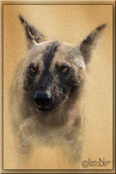 The Wild Dog: Grunge Effect Wild Dogs, Grunge, Photography, Photograph, Fotografie, Photoshoot, Grunge Style, Fotografia