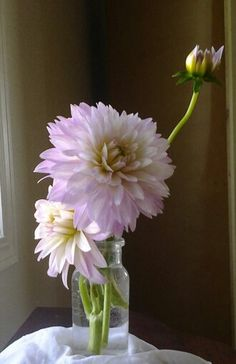 Dahlias ~ PINK: Gay Princess (front)and Alloway Candy (back)