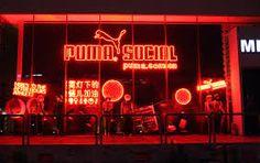 social puma - Google 検索