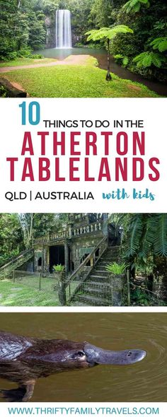 Top Things to do – Atherton Tablelands Top-Aktivitäten - Atherton Tablelands Source by . Visit Australia, Coast Australia, Queensland Australia, Australia Travel, Western Australia, Solo Travel, Travel Oz, Travel Stuff, Holiday Places