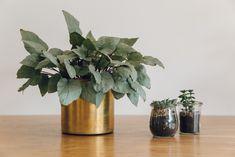 Haarkon Brass Planter Pot Plant Ikea Jar Succulent