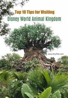 10 Tips for Visiting Disney World Animal Kingdom. Pandora The World of Avatar. Animal Kingdom Shows. Disney World Food, Disney World Vacation, Florida Vacation, Disney Vacations, Disney Travel, Cruise Vacation, Spring Break Destinations, Us Travel Destinations, Travel Tips