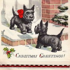 Scotties! vintage Christmas card
