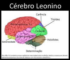 O Cérebro Leonino