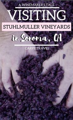 Why you should visit Stuhlmuller Vineyards in Sonoma, California + an interview to winemaker Leo Hansen | Sonoma wineries | Sonoma wine tasting | Sonoma wine map | Sonoma vineyard | #sonoma #sonomawine #Wine via @elainschoch