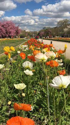 Beautiful Photos Of Nature, Beautiful Flowers Garden, Flowers Nature, Exotic Flowers, Amazing Flowers, Beautiful Birds, Pretty Flowers, Beautiful Landscapes, Wild Flowers