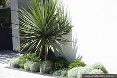 Detail Collective | Outdoor Spaces | Coastal Garden Caringbah…