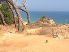 Pine cliffs overlooking Falesia beach  Algarve
