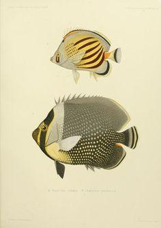 Journal des Museum Godeffroy, Vol II, 1873-1910.