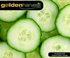 Cucumber contains just 15 calories per cup and is also packed with vitamin C, K, potassium and silica, a compound that helps to build the connective tissues. Get your delicious and fresh cucumber from #GoldenHarvest. #freshpicked #sunshinegoodness #cucumber