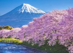 Magnificent and Magic Pink Photography, Japanese Photography, All About Japan, Sakura Cherry Blossom, Mount Fuji, Beautiful Landscapes, Sunrise, Beautiful Places, Scenery