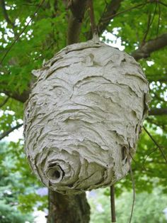 Paper wasp condo