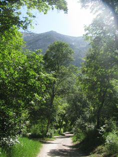 6.9.12 ~ I'm grateful for the beauty of the world around me, for trees and mountains and slanting sunlight, and the chance to enjoy them all while camping with my love. {photo taken in Provo Canyon with Canon Powershot SX110IS}