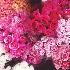 roses -- color inspiration....lavendar to hot pink, with a dab of peach