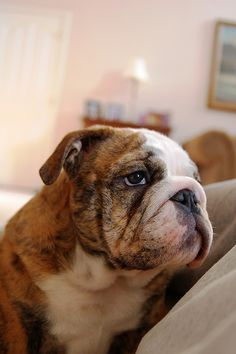 What a pensive pup! Wonder what he's thinking about?