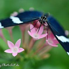 . Purple Garden, Blue Jay, Beautiful Birds, Butterfly, Dragonflies, Nature, Wings, Photography, Butterflies