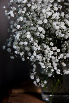 easy to forget how pretty baby's breath can be