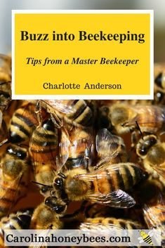 Into Beekeeping Beginners Book Sales Beginner beekeeping books with all the knowledge you need to start raising bees.Beginner beekeeping books with all the knowledge you need to start raising bees. Beekeeping Books, How To Start Beekeeping, Beekeeping For Beginners, Backyard Beekeeping, Bee Book, Raising Bees, Beginner Books, How Do I Get, Hobby Farms