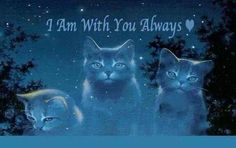All our beloved pets are waiting for us in heaven, they have their own special place called Rainbow Bridge where they greet us when we arrive, then we cross to heaven together, never to be parted again.