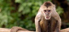 Israeli zoo searching for escaped monkey around Tel Aviv