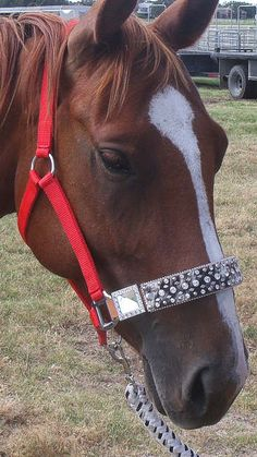 HALTERS ETC - Western Rhinestone Belts - BLING On A Budget