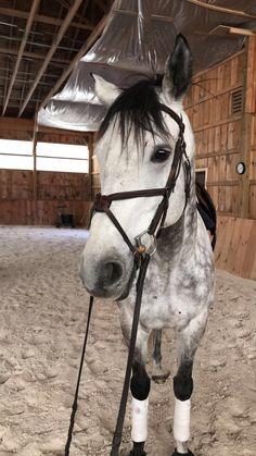 @hunterjumperqueen    pinterest's equestrian queen