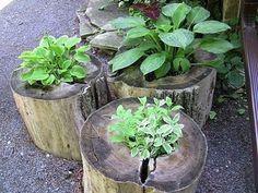 tree stump planters--portable little herb garden! Tree Stump Planter, Log Planter, Tree Stumps, Planter Ideas, Wood Stumps, Wheelbarrow Planter, Tree Logs, Flower Planters, Garden Planters