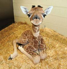 Animaux heureux animaux mignons animal girafe bébé