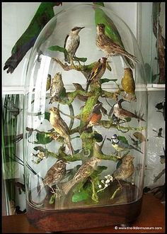 victorian taxidermy collections under glass domes The Bell Jar, Bell Jars, Cloche Decor, Cabinet Of Curiosities, Glass Domes, Glass Dome Display, Bird Cages, Displaying Collections, Globes
