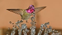 #11 Anna's Hummingbird in Arizona by Jim Burns -- Our most popular Facebook photos of 2013.