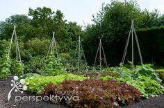 Dobrze rozplanowany ogród warzywny zapewni obfite plony