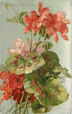 two red & one pink geraniums, prominent leaves