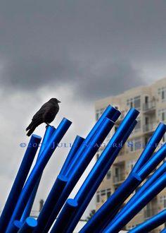 Crow Bird Photo Blue Steel Raven Black Bird by JulieMagersSoulen - interesting graphic design possibilities