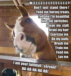 Try not to laugh. Best Animals Fail & Wins Compilation Ever ! - Horses Funny - Funny Horse Meme - - funny horse pictures with captions Funny Horse Memes, Funny Horse Pictures, Funny Horses, Cute Horses, Funny Animal Memes, Pretty Horses, Horse Love, Cute Funny Animals, Beautiful Horses