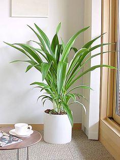 Plants/L: (有)ハートランドが手掛けたモダン多目的室です。