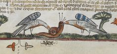 A snail faces the wrath of the #AngryBirds. https://bl.uk/manuscripts/Viewer.aspx?ref=royal_ms_10_e_iv_f112v …