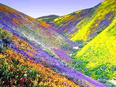 Colorful hills, California, USA