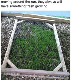 DIY - Make a screen to protect a section of growing grass in your chicken run.