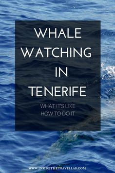 Whale watching in Tenerife with help on how to arrange a trip in Los Gigantes. Thank you for this generous content: Francisco Jesus Saez Muñoz is a Tenerife Real Estate Agent, with a focus on properties in the South of Tenerife. Tenerife, Pamplona, Murcia, Bilbao, Valencia, Ibiza, Barcelona Travel, Spain Travel, Portugal Travel