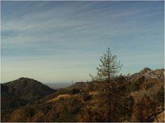 Trees in the San Bernardino Mountains.