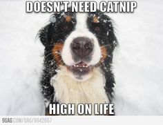 What a dog owner think about  catnip.