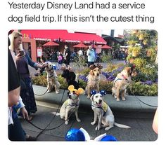 Here Is Why Service Dogs Are So Awesome (Memes) - I Can Has Cheezburger? Twenty Saints: Wholesome Service Dogs Memes - World's largest collection of cat memes and other animals Funny Animal Memes, Cute Funny Animals, Dog Memes, Funny Animal Pictures, Cute Baby Animals, Funny Cute, Funny Dogs, Animals And Pets, Funny Memes