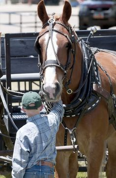 Virgil Parker holds onto a draft horse during 4-H Horse Camp in Logan, Utah. (Photo by Eli Lucero)