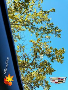 1st signs of Fall in NY out the Cadillac CTS Ultraview Sunroof #NYLovesFall #iSpyNY