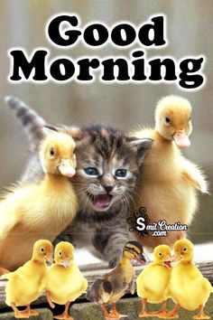 Good Morning Animals Pictures and Graphics Good Morning Animals, Funny Good Morning Images, Good Morning For Him, Good Morning Friends Quotes, Morning Memes, Good Morning Picture, Good Night Meme, Good Morning Greetings, Quotes Images