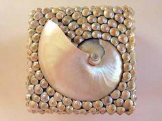 Pearl Nautilus and Umbonium Shell Beach Decor Box