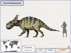 Pachyrhinosaurus by cisiopurple on DeviantArt Prehistoric Wildlife, Prehistoric Creatures, Jurassic World Dinosaurs, Jurassic Park World, Dinosaur Funny, Dinosaur Art, Extinct Animals, Monster Hunter, Fauna